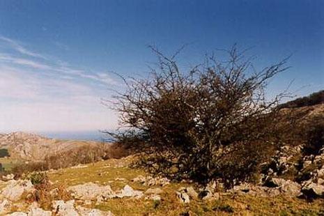 Izarraitz, Euskadi