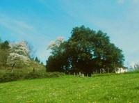 Kalamua, Eibar